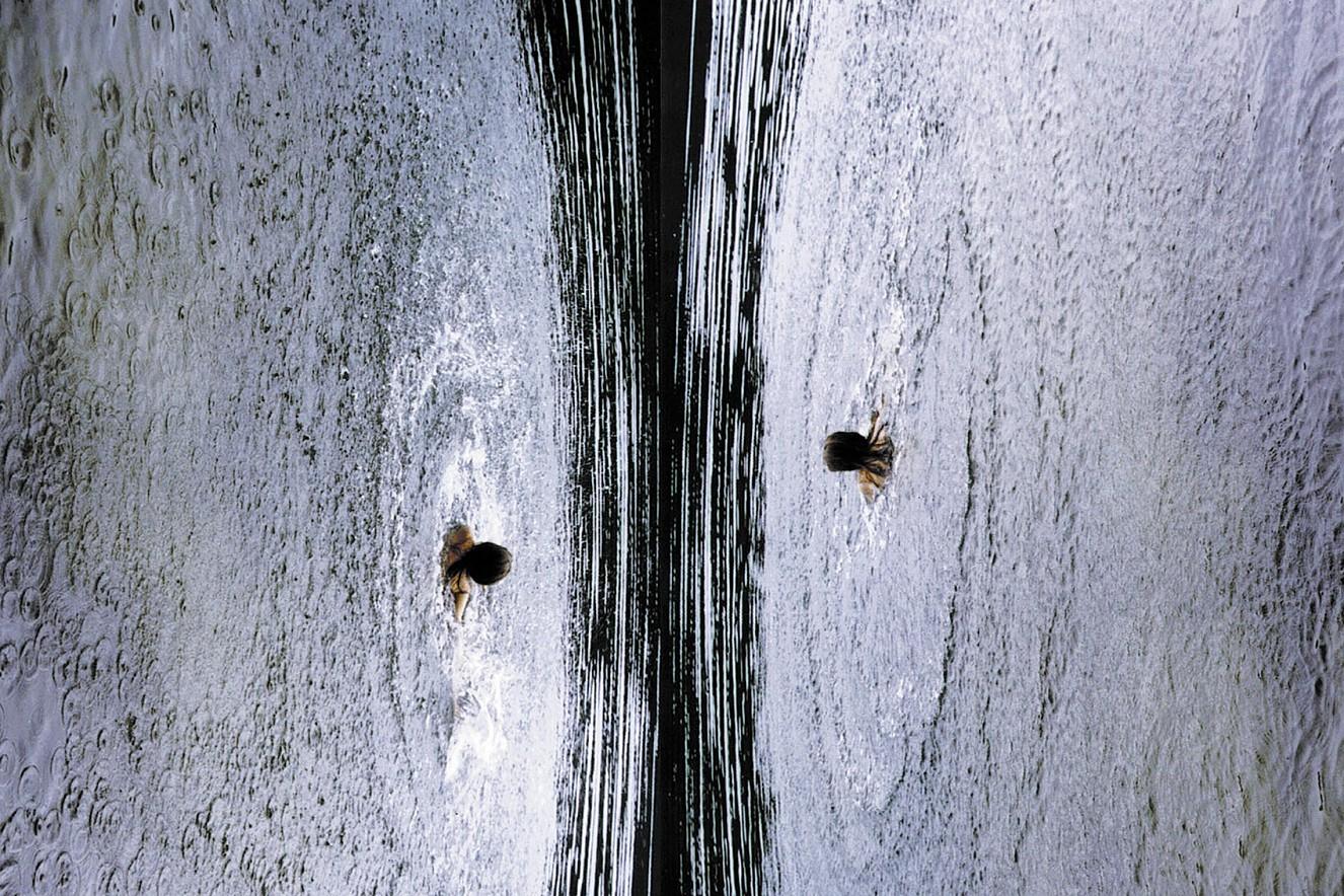 Circular  Fine art print metallic on Aludibond  60x80 cm, 2001/2019