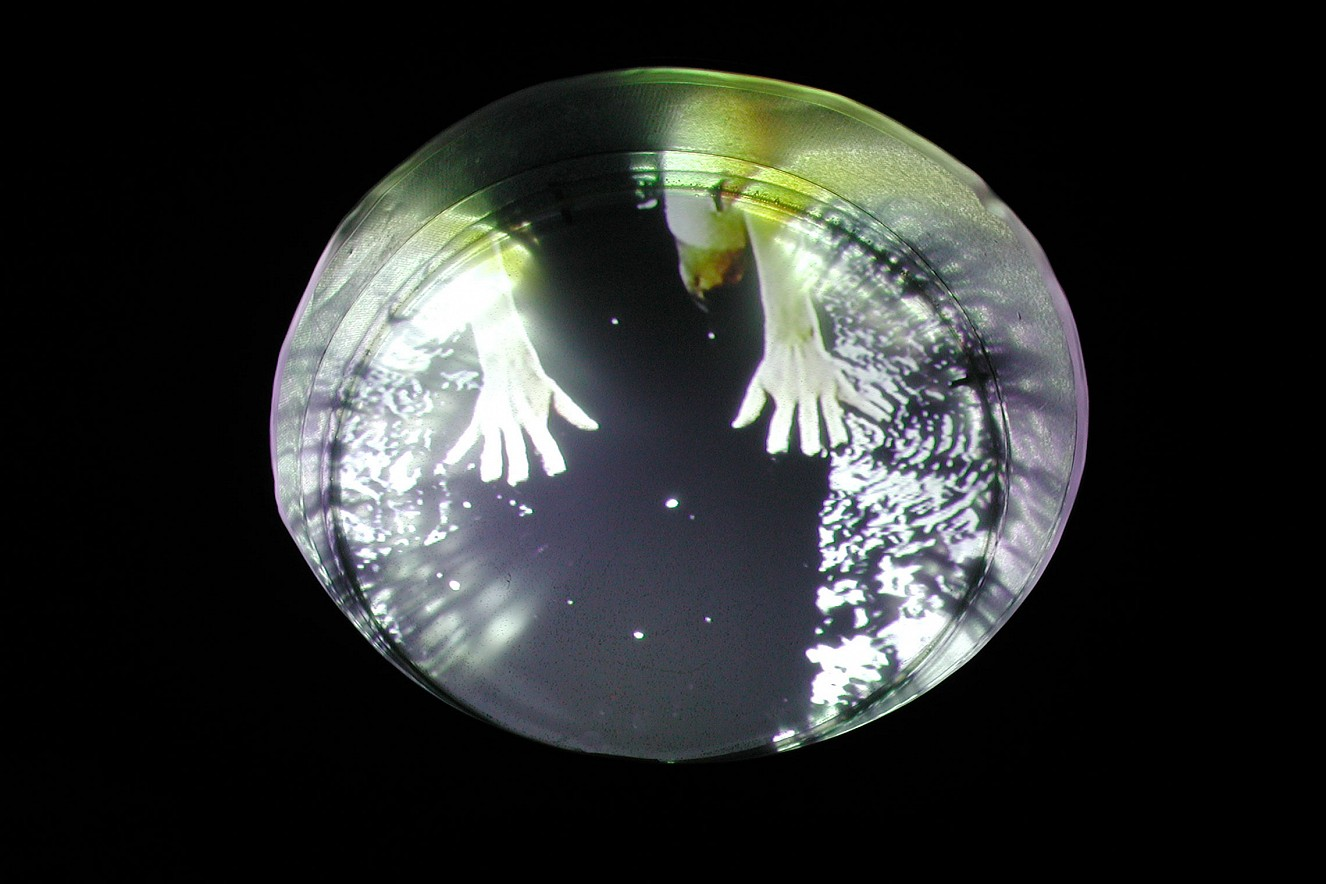 Tonne - Hände  Videostill, Video in der Tonne  Ø 80cm, 2001